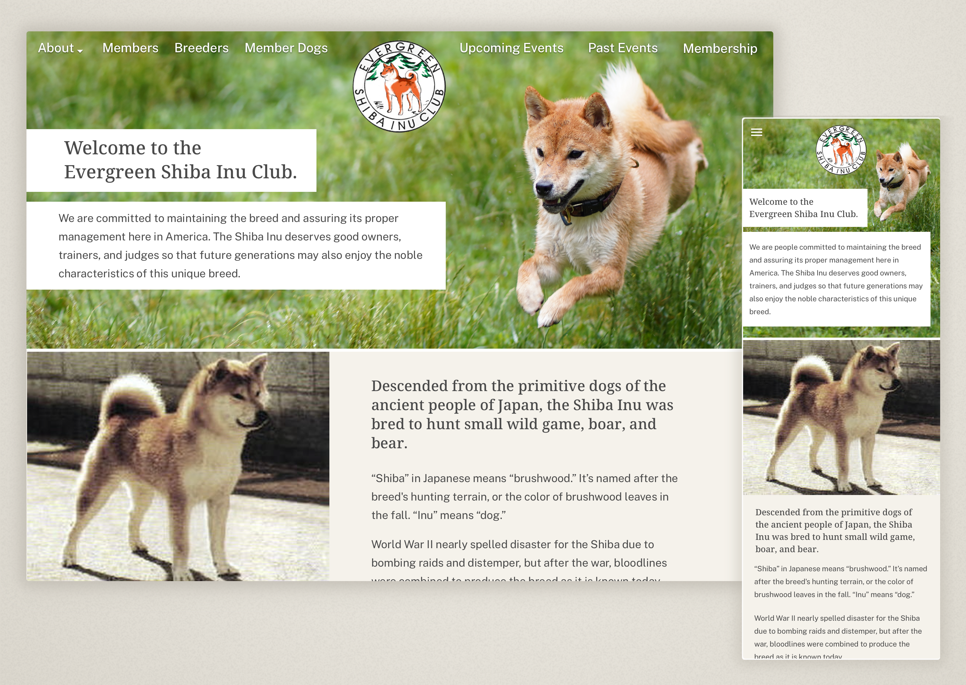 Desktop and mobile screenshots of a website for the Evergreen Shiba Inu Club.